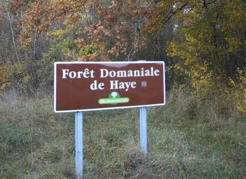 Mobilisation générale pour la forêt de Haye : la forêt compte sur vous !